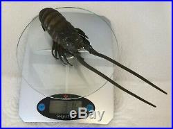 Bronze Animalier En Bronze Patine Brune Langouste/ Japon/ Fin XIX Siecle